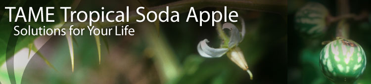 TAME Tropical Soda Apple